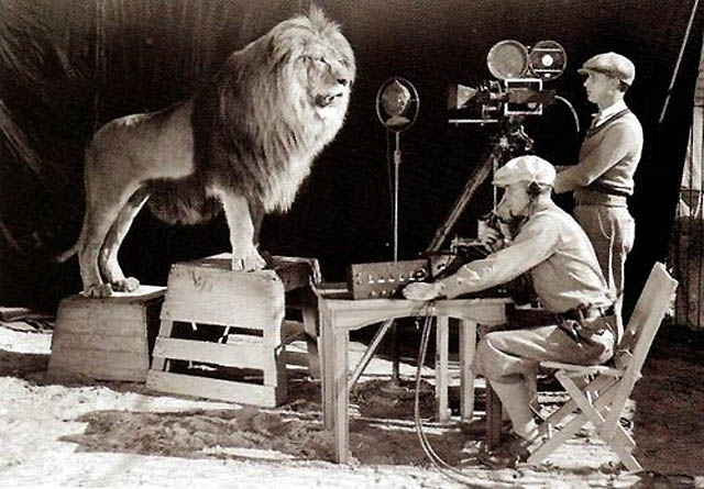mgm_lion_1