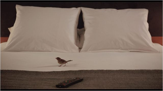 bird people 4