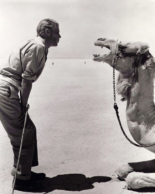 Title: LAWRENCE OF ARABIA ¥ Pers: O'TOOLE, PETER ¥ Year: 1962 ¥ Dir: LEAN, DAVID ¥ Ref: LAW001AZ ¥ Credit: [ COLUMBIA / THE KOBAL COLLECTION ]