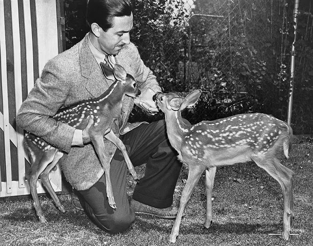"Seeing ""wild"" animals on the Hyperion studio lot was no odd occurrence. Used as live-action reference models for Disney's artists, the deer pictured here were welcome visitors to Walt's dream factory. They helped studio chief and artist alike prepare for the upcoming animated film, Bambi (1942)."