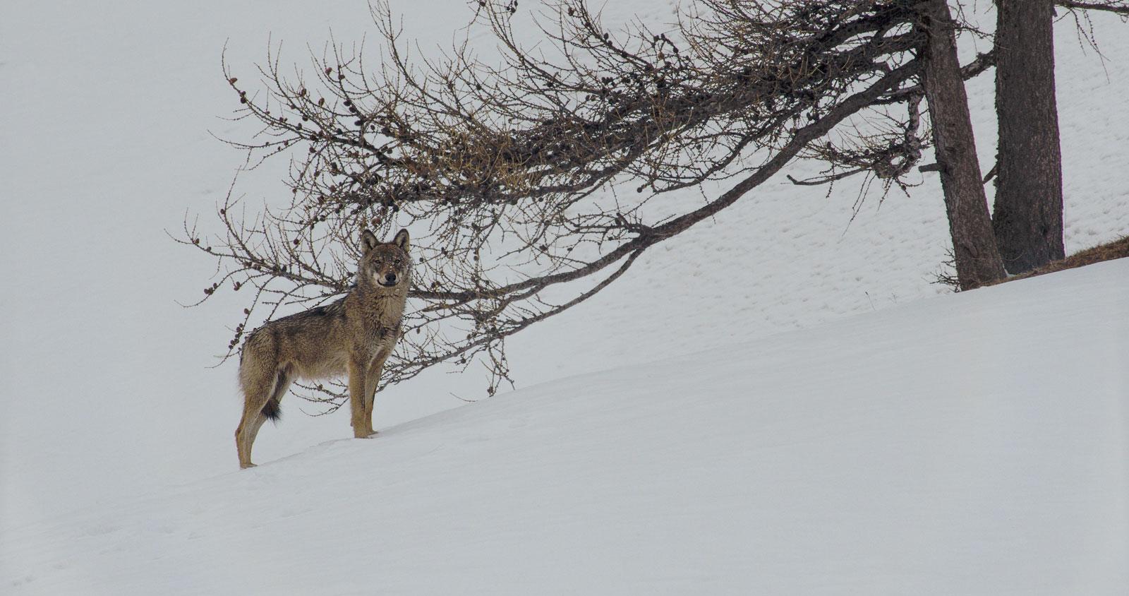 la-vallee-des-loups-1-3